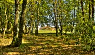 Private Wood 3000 m2 surrounded with Fence
